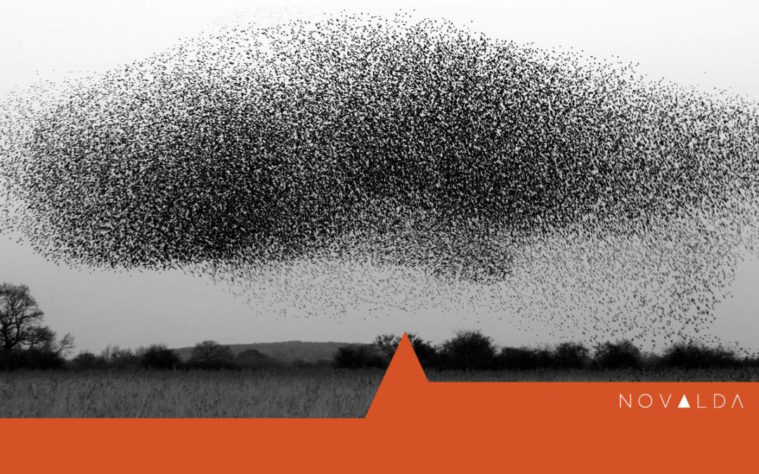 Starling murmuration represents change leadership rather than change management Novalda