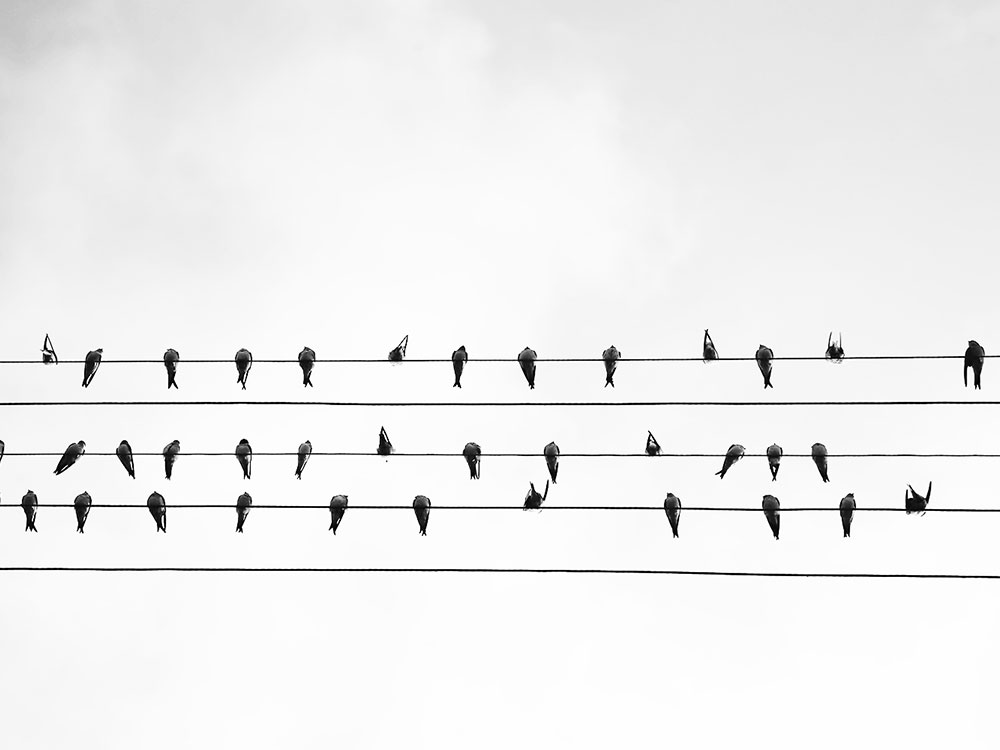 Birds on a wire represent virtual meeting for ORSC Community of Practice